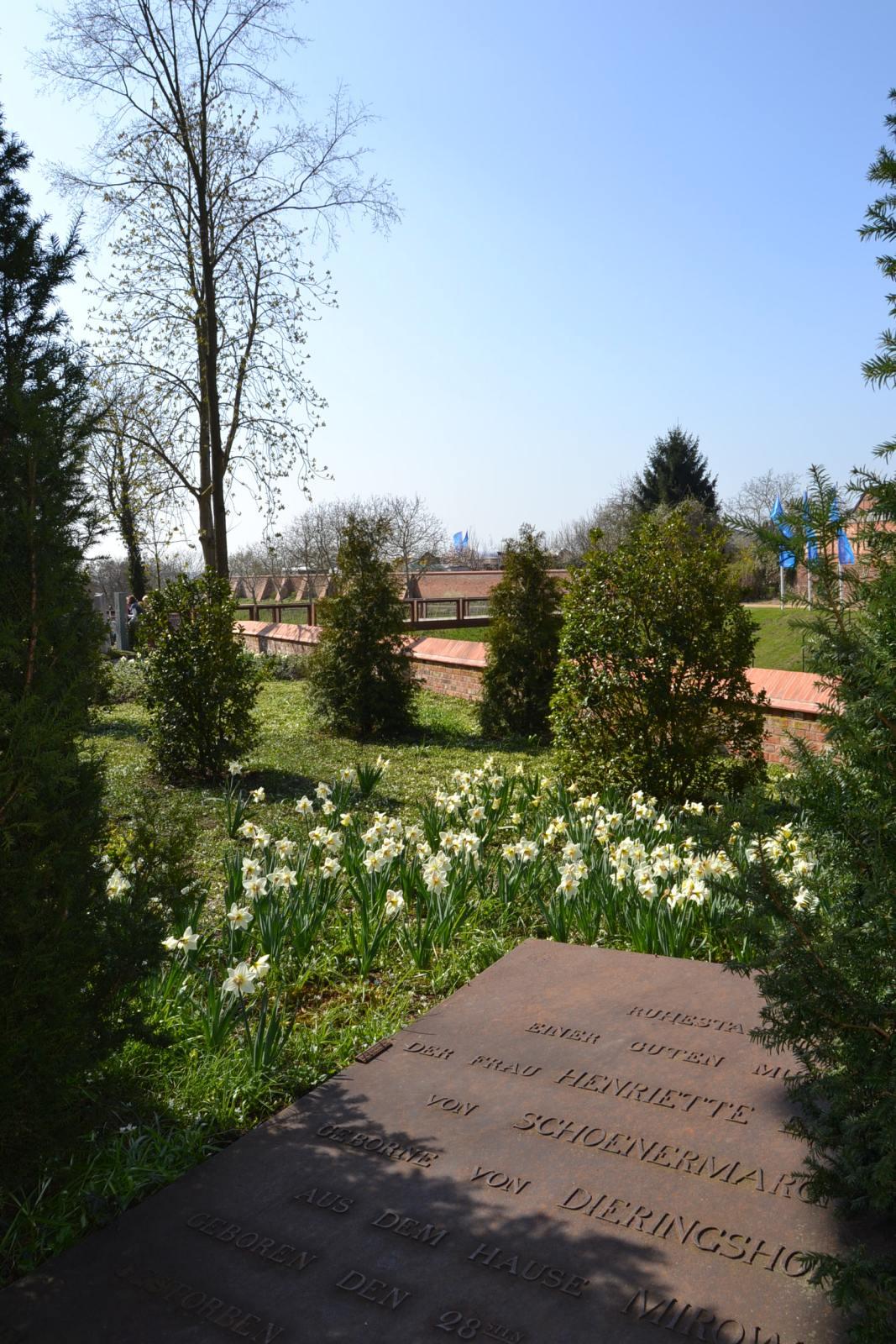 Alte Grabplatte mit Narzissen